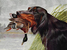 GORDON SETTER CHARMING DOG GREETINGS NOTE CARD BEAUTIFUL DOG AND DUCK HEAD STUDY