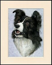 BORDER COLLIE GREAT HEAD STUDY DOG PRINT MOUNTED READY TO FRAME