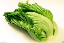Mustard Kekkyu Takana -2000 Seed (Brassica juncea) Variety prized for pickling !