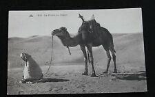 CPA Afrique La prière au desert Nomade et son dromadaire