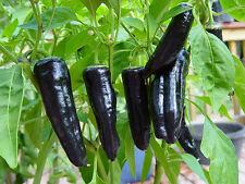 95 semi di PEPERONCINO MARCONI VIOLA / Viola Orto Verdure Piante