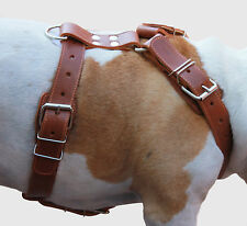 "High Quality Leather Dog Harness Pitbull German Shepherd Doberman 31- 37"" chest"