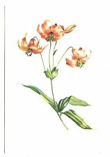 Canada Lily Postcard Flowers Lilies Executed in Water Color by Kathleen Cassel