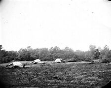 New 8x10 Civil War Photo: Dead Horses at Cedar Mountain Battlefield, Virginia
