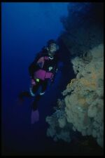 156070 Wall Of Pacific Sea Fans With Scuba Diver A4 Photo Print
