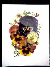 2 Assorted REAL PRESSED FLOWERS & LEAVES UNCUT PICTURES Ready To Frame Free Ship