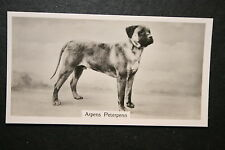 Bull Mastiff     Vintage Show Champoin Photo Card # VGC