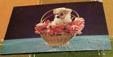 Retro Postcard: PUREBRED MINIATURE FRENCH POODLE IN A BASKET OF FLOWERS DOGS