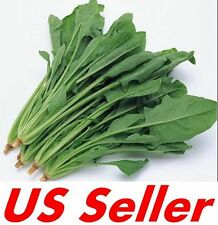 200 PCS Spinach Bloomsdale Long Standing Seeds E54, HEIRLOOM NON GMO US Seller