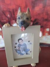 PIT BULL TERRIER ~    picture frame 15 -73
