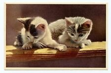 vintage cat postcard super cute kittens cats balance on fence