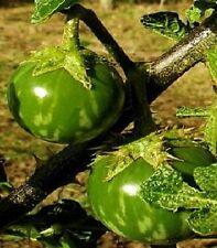 Thailändische Aubergine // wächst sehr schnell und blüht wie eine Blume // Samen