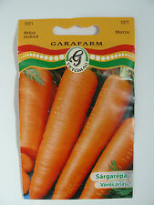 Carrot `Red Giant` Seeds GMO FREE!! Approx 3000 Seeds