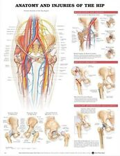 ANATOMY & INJURIES OF HIP POSTER (66x51cm) ANATOMICAL CHART HUMAN BODY MEDICAL