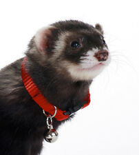 MARSHALL PET FERRET COLLAR WITH BELL RED JINGLE FREE SHIPPING TO USA ONLY