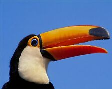 25 Singing Tropical Birds from S. America, Relax to the Sound of Birds in Nature