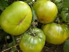 45 AUNT RUBYS GERMAN GREEN TOMATO Heirloom Seeds Organic No GMO BEST EVER TOMATO