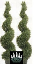 Two 5 foot Artificial Rosemary Spiral Topiary Trees Potted with Christmas Lights