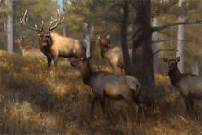 """In the Middle of Things"" Kyle Sims Artist Proof 30"" Giclee Canvas - Elk"