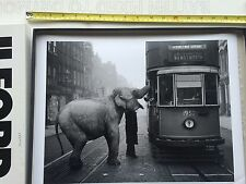 "'HUNGRY ELEPHANT' 1936, LONDON 12x16"" Original darkroom archival resin print"