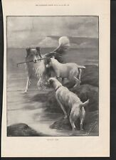1899 HOLIDAY TIME DOGS PLAYING WITH STICK BEACH ROCKPOOL ART BY MOODY