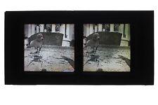 La pose du chien France Autochrome Lumière Stéréo Grand Format 8x17 cm
