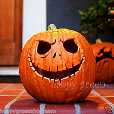 PUMPKIN - HALLOWEEN GOLD - Cucurbita p. 25 Seeds vegetable up to 20kg/44lb fruit