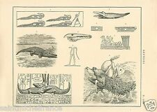 Reptiles Machoire Crocodiles Nil Tortue Jaw Turtle Snakes GRAVURE OLD PRINT 1884