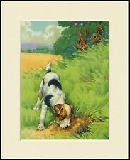 WIRE FOX TERRIER DOG LOOKING FOR RABBITS LOVELY PRINT MOUNTED READY TO FRAME