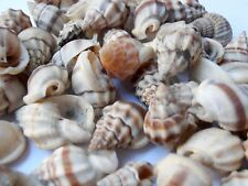 Natural Sea Shell Terrarium FAIRY GARDEN  Fish Tank Accessories *