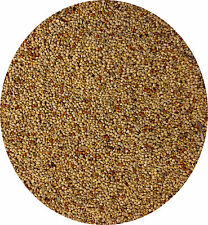 Foreign Finch Seed 500g The Perfect Food Feed For Your Finch Finches