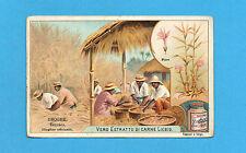FIGURINA LIEBIG-ANNO 1902- DROGHE Zenzero (Zingiber officinale) - 700