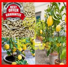 100Pcs+ SEEDS FRESH and ORIGANIC Lemon Tree Indoor Outdoor Bonsai Heirloom Fruit