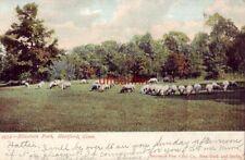 PRE-1907 SHEEP GRAZING IN ELIZABETH PARK HARTFORD, CT 1907