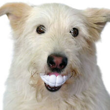 NEW Hilarious Humunga Chomp Hollow Ball Dog Toy - Looks Like Goofy Human Teeth