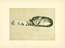 Dog Print 1932 German Shepherd snuggles with Puppy by CECIL ALDIN Vintage