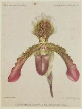 COGNIAUX GOOSSENS CYPRIPEDIUM ZAMPA STERIOPE BOTANICA BOTANY ORCHIDEE ORCHIDS