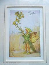 CICELY MARY BARKER - The Toad Flax Fairy, Flower Fairies - Vintage Mounted Print
