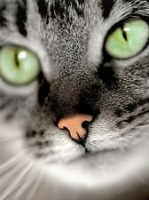 GREY GREEN EYED CAT FACE CLOSEUP EYES PHOTO ART PRINT POSTER PICTURE BMP213A