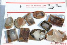 SLABS - Rare Priday Plume Agate Thunderegg Slices - Ready to Cab and Polish! OR