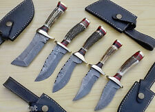 """Lot of 5 Custom Made Damascus TopSteel 9"""" Hunting Knives + Stag Horn Brass Guard"""