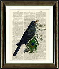 Old Book page Art Print - Blackbird and Peacock Feather - Dictionary Wall Art