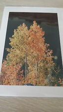 Beautiful Art Card by Gary Pennington Photography w/ Envelope in Plastic Sleeve