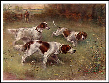 IRISH RED AND WHITE SETTER THREE DOGS AT WORK LOVELY  DOG PRINT POSTER