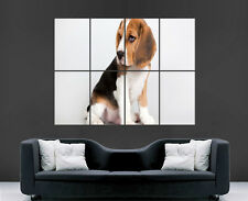 Mignon beagle chien chiot poster print giant wall art image énorme