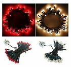 35 PEARLISED BERRY CHRISTMAS TREE GARLAND DECORATION LED LIGHTS IN WHITE / RED