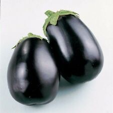 AUBERGINE - EGG PLANT - BLACK BEAUTY 150 SEEDS - ORGANIC