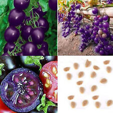 30Pcs Purple Cherry Tomato Seeds Organic Heirloom Fruit Seeds Home Garden Plant