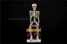 Halloween Prop LIFE-SIZE AGED HUMAN SKELETON Haunted House Party Decoration