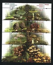** MNH Block / Special Sheet - POLAND 2012 - Mushrooms in Polish forests - FLORA
